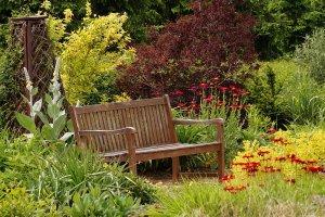 Chrysanthemum coccineum, Pyrethrum roseum - złocień różowy