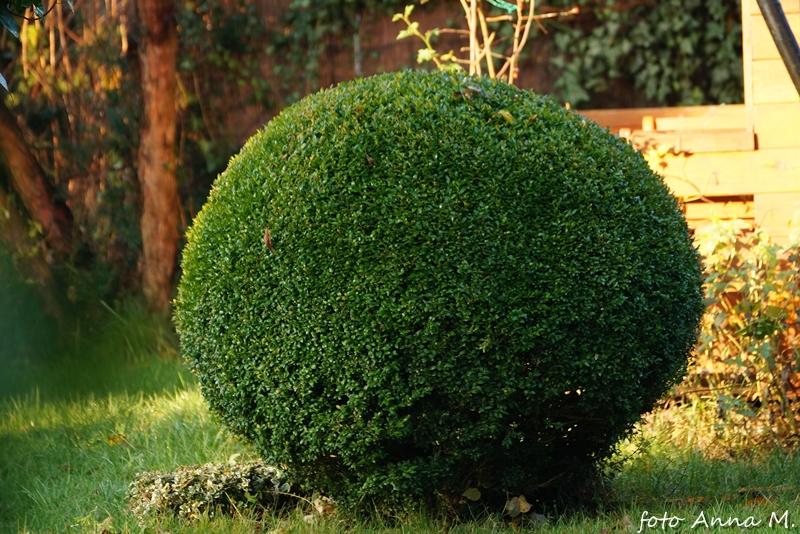Rzeźba roślinna do małych ogrodów