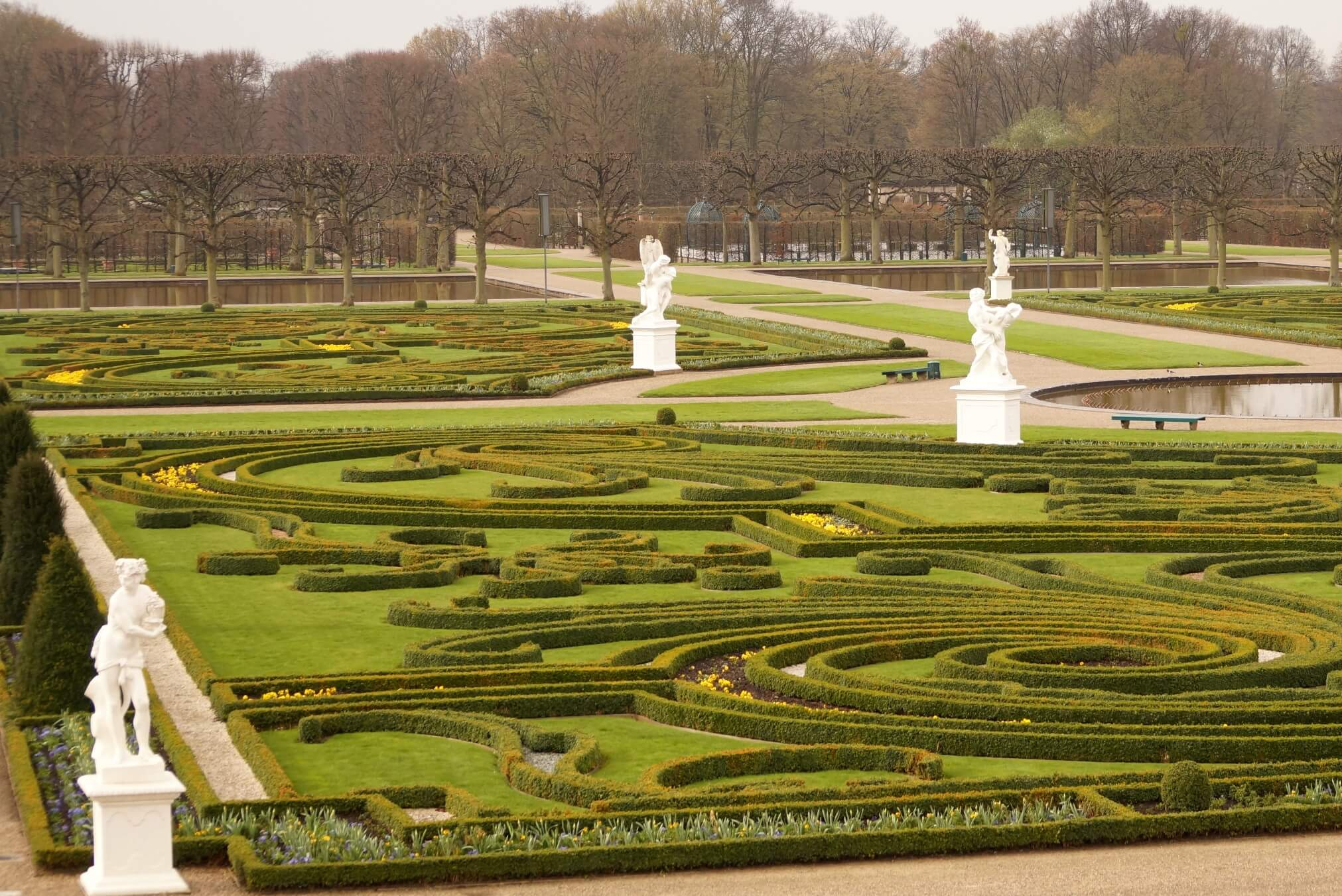 Buxus sempervirens - bukszpan wiecznie zielony