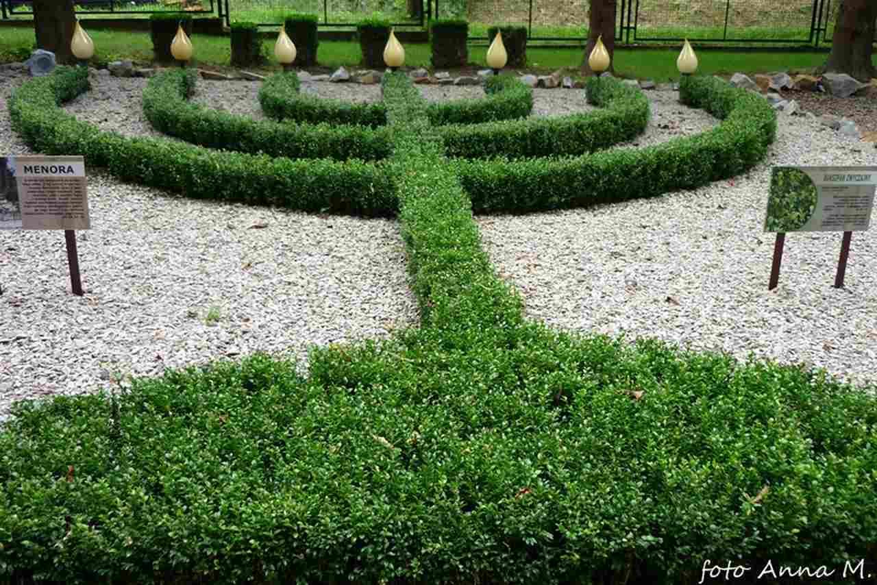 Buxus sempervirens - bukszpan wiecznie zielony,Ogród Biblijny, Myczkowce