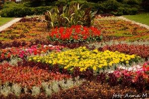 Barwny kwietnik letni - Ogród Botaniczny UW, kwietniki dywanowe