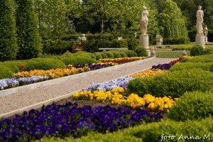 Bratki - ulubione kwiaty na wiosenne kwietniki, kwietniki dywanowe