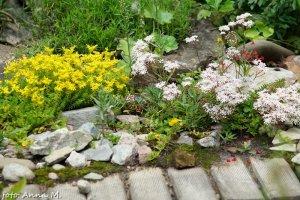 Rozchodniki to przede wszystkim rośliny na skalniaki