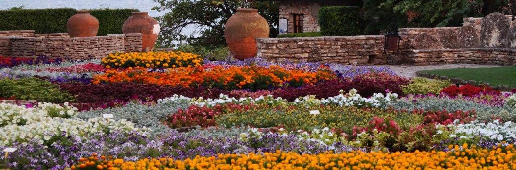Rozstawy sadzenia roślin kwietnikowych
