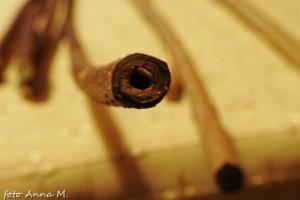Pędy forsycji są puste w środku, dlatego pędy na sadzonki tniemy w węzłach, a nie pod węzłem.