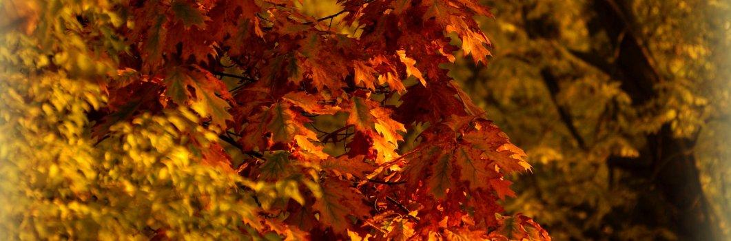 Złota jesień – październik