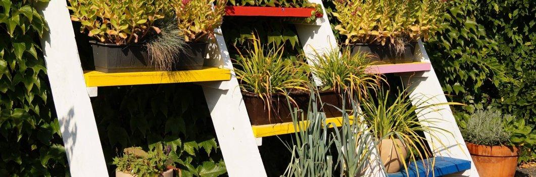 Rośliny pojemnikowe