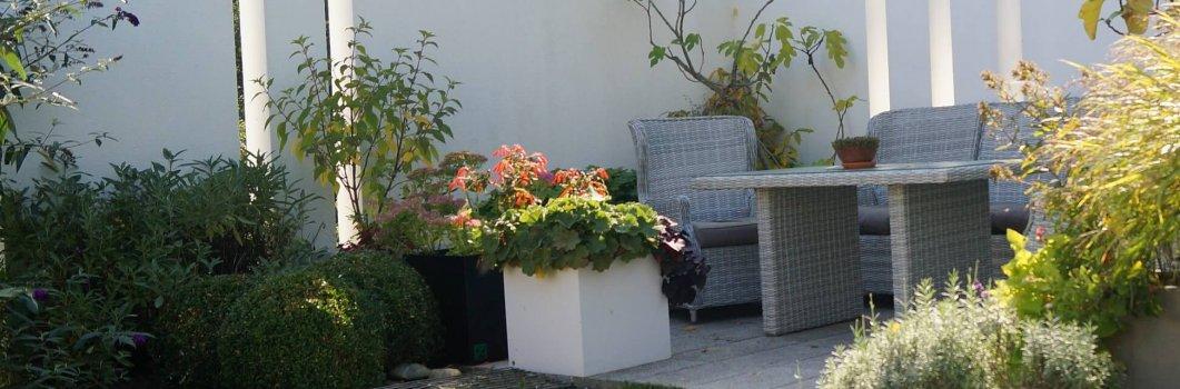 Rośliny do małych ogrodów