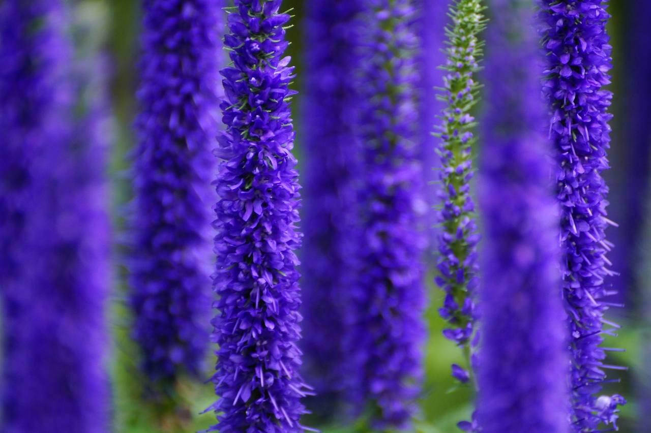 Kwiecień – wysiewamy rośliny jednoroczne do gruntu
