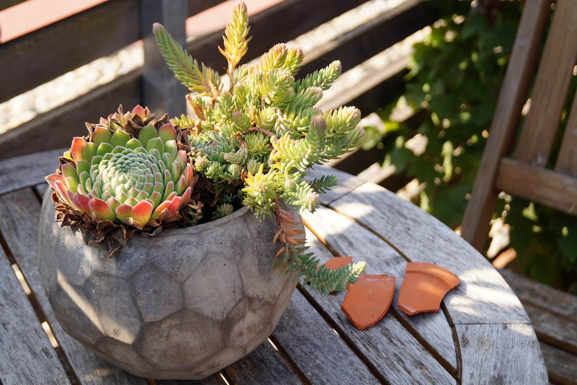 Jak przygotować rośliny ozdobne do zimy