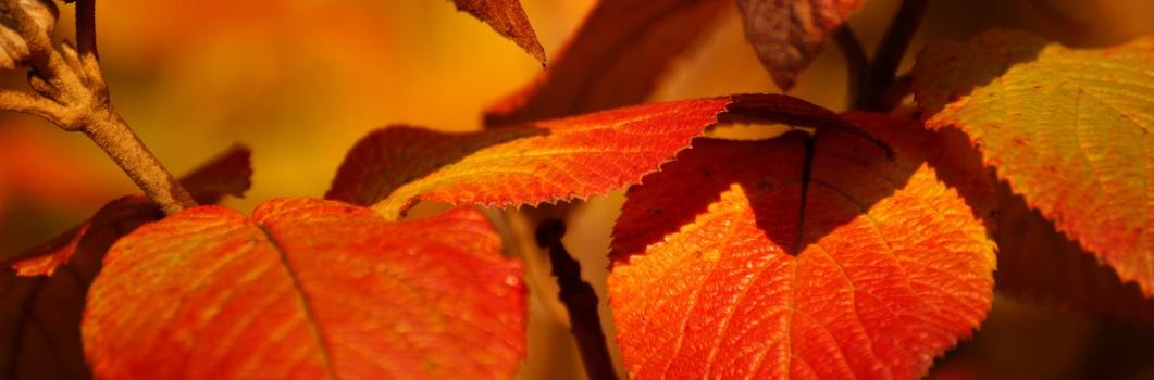 Ogród ozdobny w październiku