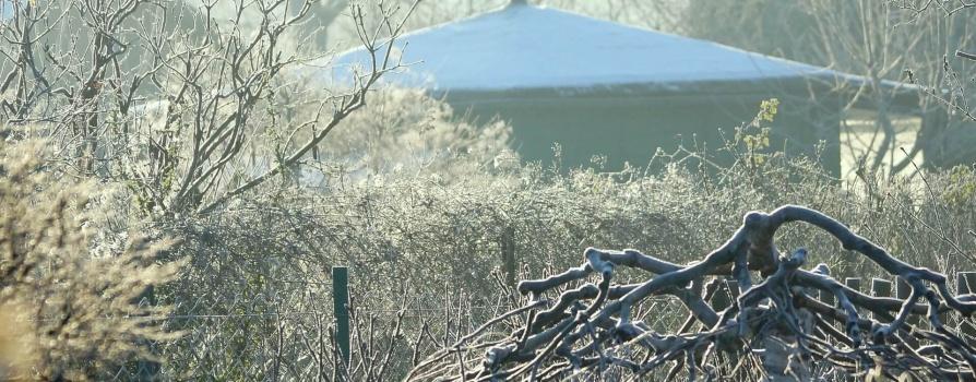 Przygotowanie roślin do zimowania