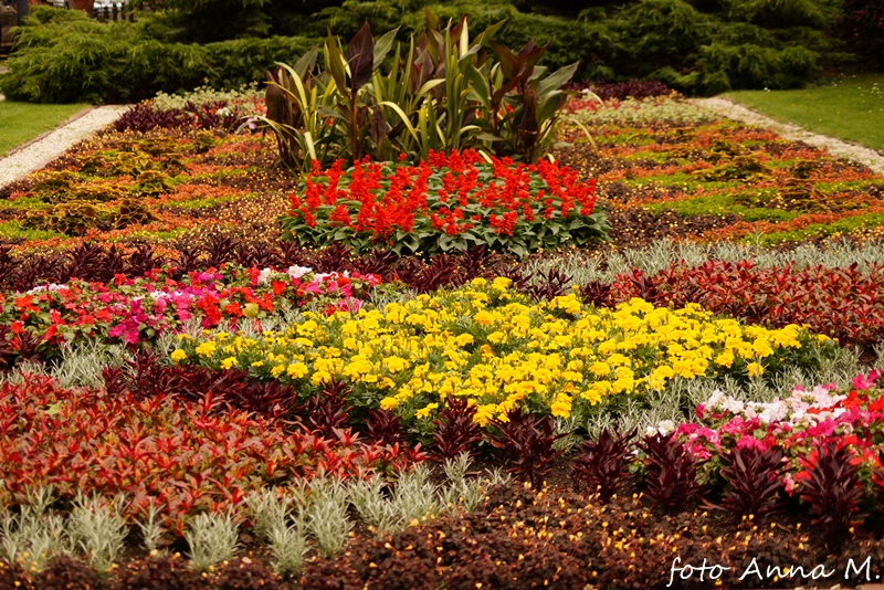 Rośliny kwietnikowe
