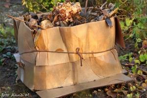 Hortensja ogrodowa zapakowana na zimę