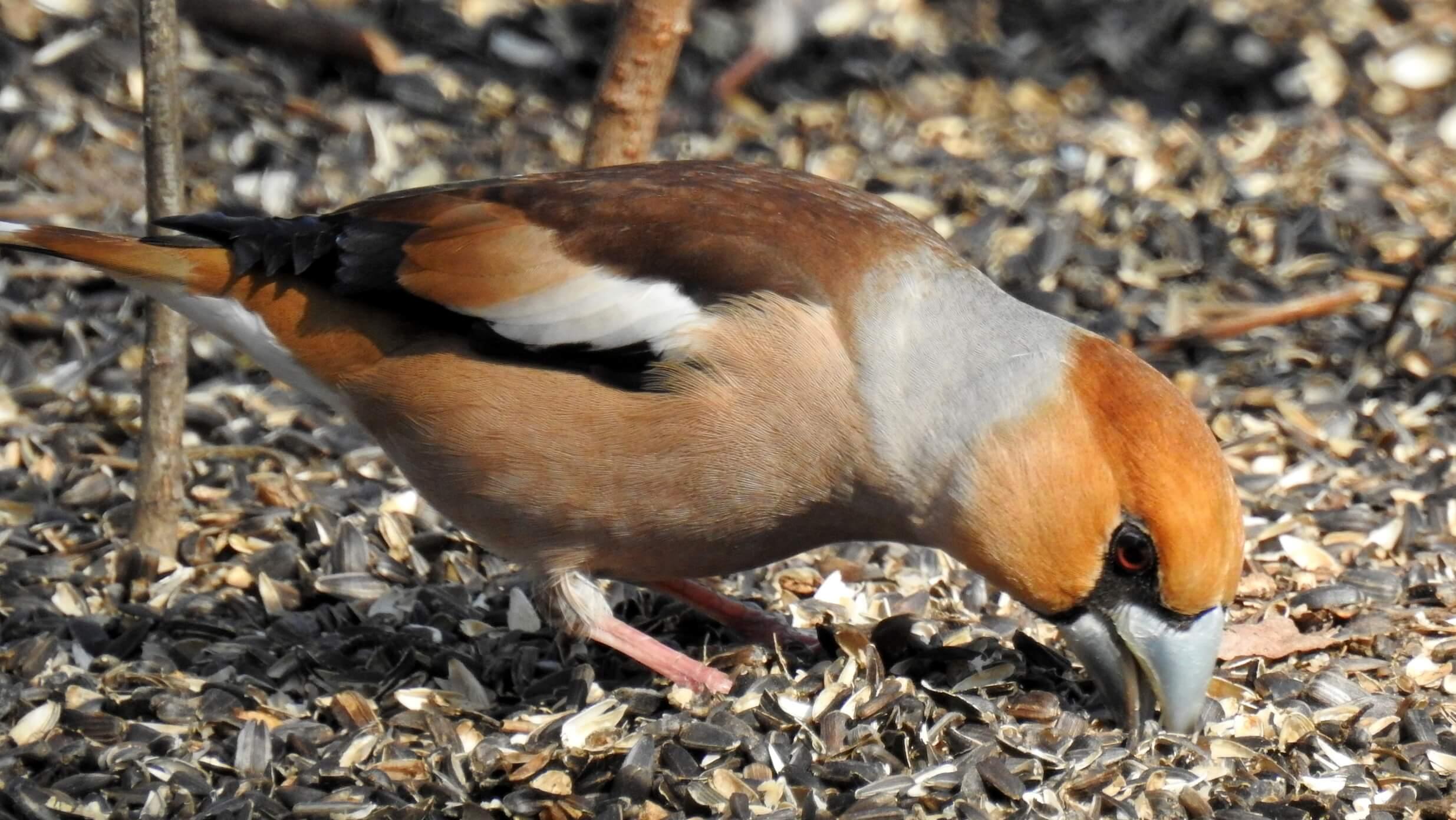 Ptasi ogród zimą