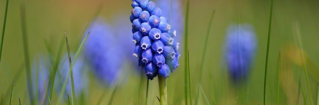 Pierwiośnie – kwiecień