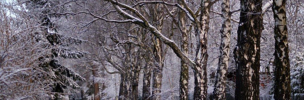 Zima – styczeń
