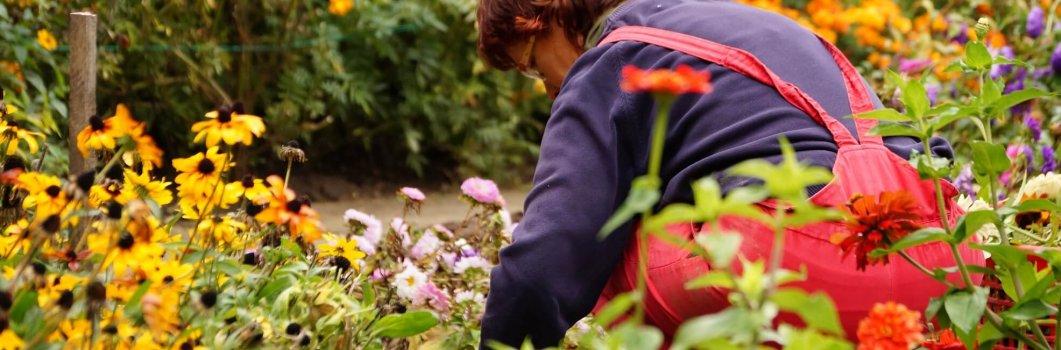 Uprawa – rośliny jednoroczne wysiewane do gruntu