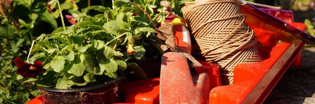 Uprawa – rośliny dwuletnie